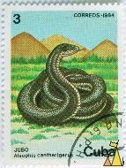 Cuban racer, Cuba, stamp, reptile, snake, Cuban racer, Alsophis cantherigerus, Jubo, Correos, 1984
