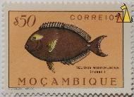 Cuvier's Surgeonfish, Mocambique, Mozambique, stamp, fish, $50, correios, Lito Nacional Portugal, Teuthis nigrofuscus, Forsk., Acanthurus xanthopterus