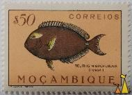 Cuviers Surgeonfish, Mocambique, Mozambique, stamp, fish, $50, correios, Lito Nacional Portugal, Teuthis nigrofuscus, Forsk., Acanthurus xanthopterus