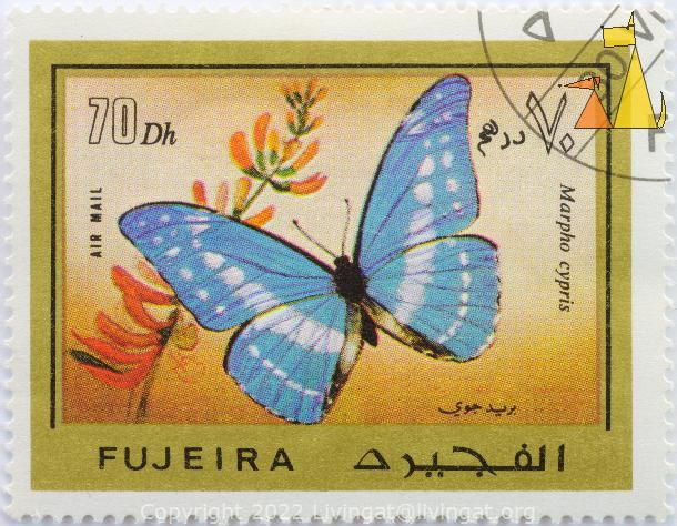 Cypris Morpho, Fujeira, Fujairah, stamp, insect, butterfly, Air Mail, 70 Dh, Marpho cypris, Morpho cypris