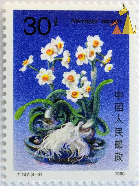 Daffodil, China, stamp, plant, flower, Narcissus tazetta, 30, 1990, T.147.(4-3)