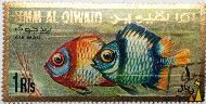 Damsels, Umm al Qiwain, UAE, stamp, fish, Umm al Qiwain, 1, dh, Air Mail, Damsel fish