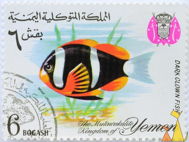 Dark Clown, Fish, The Mutawakalite Kingdom of Yemen, Yemen, stamp, coat of arms, fish, 6 Bogashi, Amphiprion chrysopterus