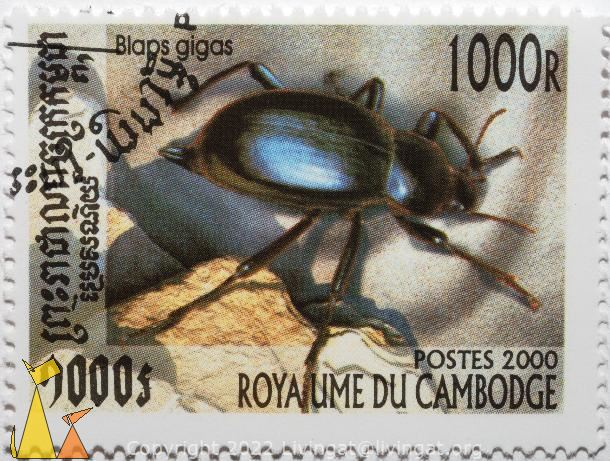 Darkling beetle, Royaume du Cambodge, Cambodia, stamp, insect, beetle, postes, 2000, Blaps gigas, 1000 R