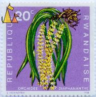 Diaphananthe Orchid, Republique Rwandaise, Rwanda, stamp, plant, flower, J Van Noten, 1968, 20 c, Orchidee Diaphananthe, Diaphananthe spp, Orchid