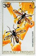 Diopsis fumipennis, Republique Rawandaise, Rowanda, stamp, insect, 20 C, Jean van Noten, Diopsis fumipennis