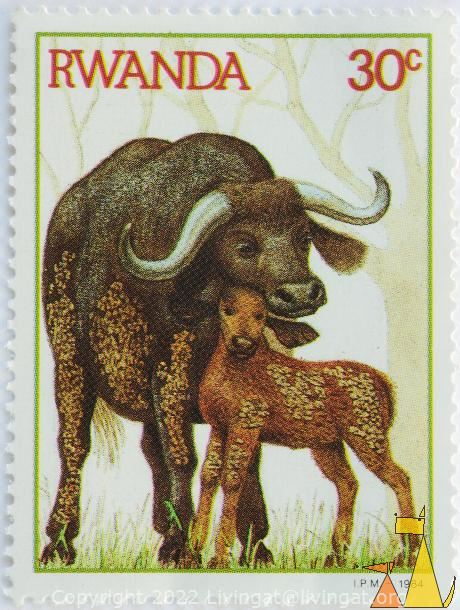 Dirty Buffalo, Rwanda, stamp, mammal, dirty, Syncerus caffer, 30 c, IPM, 1984