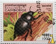 Dor beetle, Royaume du Cambodge, Cambodia, stamp, insect, beatle, Geotrupidae, Geotrupidae spp, Postes, 1998, 1000 R
