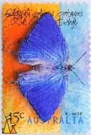 Dull Oakblue, Australia, stamp, insect, butterfly, 45 c, 1998, Arhopala centaurus