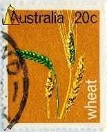 Ears of Wheat, Australia, stamp, plant, crop, farming, wheat, Triticum aestivum