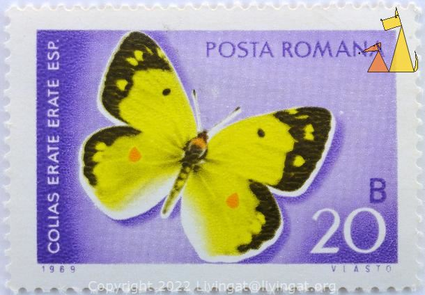 Eastern Pale Clouded Yellow, Romana, Romania, stamp, insect, butterfly, 20 B, Vlasto, Posta, 1969, Colias erate erate esp, Colias erate