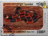 Eastern coral snake, Royaume du Cambodge, Cambodia, stamp, reptile, Micrurus fulvius, Eastern coral snake, 1500 R, Royaume du Cambodge, Postes, 1999