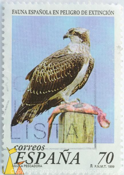 Eating Osprey, Espana, Spain, stamp, bird, Pandion haliaetus, Correos, 70, FNMT, 1999, Aguila Pescadora