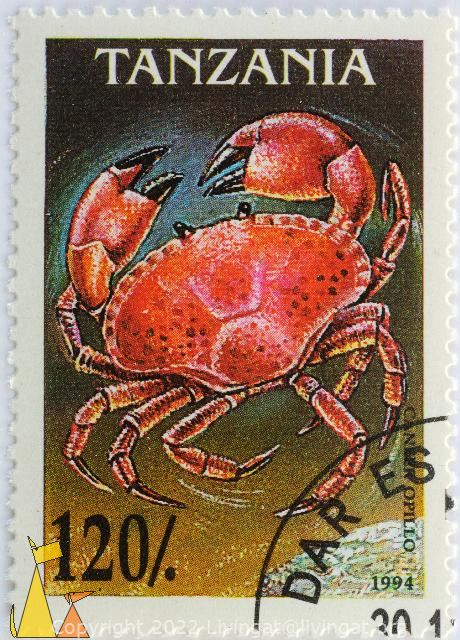 Edible or Brown crab, Tanzania, stamp, crab, daresalam, 120, 1994, Caneer opillo, Cancer opillo, Cancer pagurus