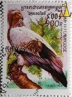 Egyptian Vulture, Royaume du Cambodge, Cambodia, stamp, bird, vulture, Neophron pernopterus, Neophron percnopterus, Eguptian Vulture, 900R, Postes, 1999
