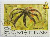 Eight-armed sea star, Viêt Nam, Vietnam, stamp, underwater, buu chinh, 3 Dong, Sao Bien, Luidia maculata