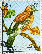 Eurasian Jay, Sharjah and Dependencies, Sharjah, UAE, stamp, bird, Garrulus glandarius, 35 Dh, Air Mail