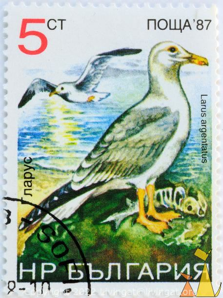 European Herring Gull, Bulgaria, stamp, bird, Larus argentatus, 5 ct, Nowa, 87
