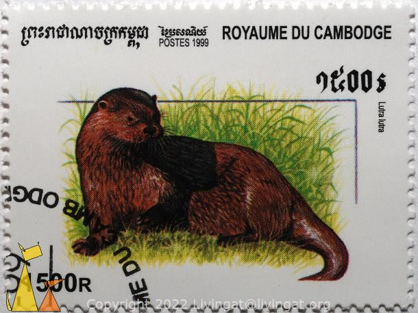 European otter, Royaume du Cambodge, Cambodia, stamp, mammal, Lutra lutra, Postes, 1999, 1500 R
