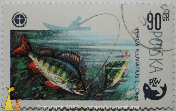 European perch, Polska, Poland, stamp, fish, 90 Gr, Okon, fishing, 1979, PZW, Perca fluviatilis