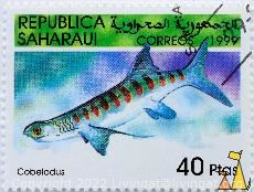 Extinct Shark, Republica Saharaui, Sahrawi, stamp, fish, shark, Cobelodus spp, 40 Ptas, Correos, 1999
