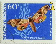 Eyed Hawk-Moth, Magyar, Hungary, stamp, insect, butterfly, Vertel Jozsef, Posta, Smerinthus ocellata, Smerinthus ocellatus, Est pavaszem, 60 f, Eyed Hawk-Moth