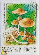 Fairy Ring Mushroom, Magyar, Hungary, stamp, mushrom, Varga Pal, 1984, 1 Ft, Posta, Mezei szegfugomba, Marasmius oreades