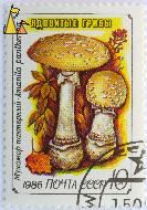 False Blusher, CCCP, Russia, stamp, mushrom, noyta, 1986, 10 K, Amanita pantherina