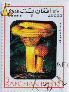 False saffron milk-cap, Afghan, Afghanistan, stamp, mushrom, post, 1999, 40 000 Afs, Lactarius deterrimus