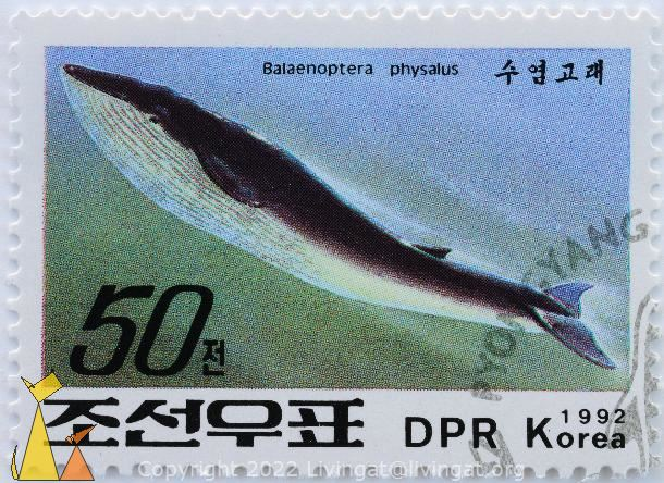 Fin Whale, DPR Korea, North Korea, stamp, mammal, whale, 1992, 50, Balaenoptera physalus