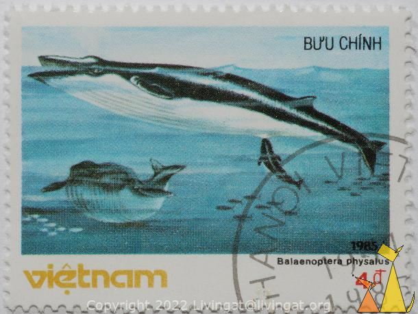 Fin Whale, Viêtnam, Vietnam, stamp, fish, Buu Chinh, 4 dt, 1985, Balaenoptera physalus