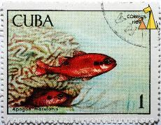 Flamefishes, Cuba, stamp, fish, Apogon maculatus, 1, correos, 1969