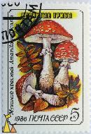 Fly Agaric in Autumn, CCCP, Russia, stamp, mushrom, noyta, 1986, 5 K, Amanita muscaria