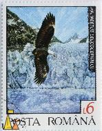 Flying Bald Eagle, Romana, Romania, stamp, bird, posta, 1992, 6 L, Haliaeetus leucocephalus