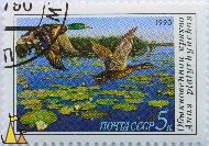 Flying Females, CCCP, Russia, stamp, bird, flying, duck, 1990, 5 k, Noyta, Anas platyrhynchos
