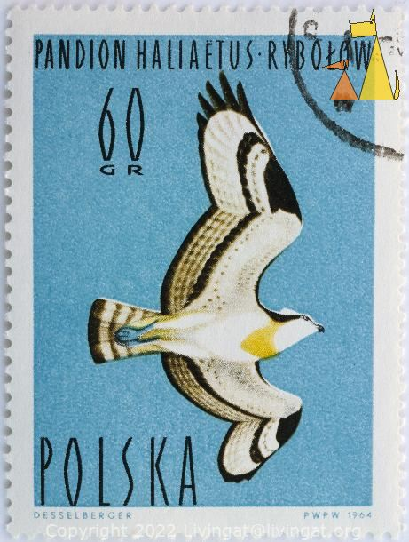 Flying Osprey, Polska, Poland, stamp, bird, Desselberger, PWPW, 1964, Pandion haliaetus, flying, 60 Gr, Rybolow