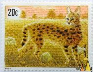 Focused Serval, Rwanda, stamp, mammal, cat, Severin, Imondo, 1981, 20 c, Leptailurus serval