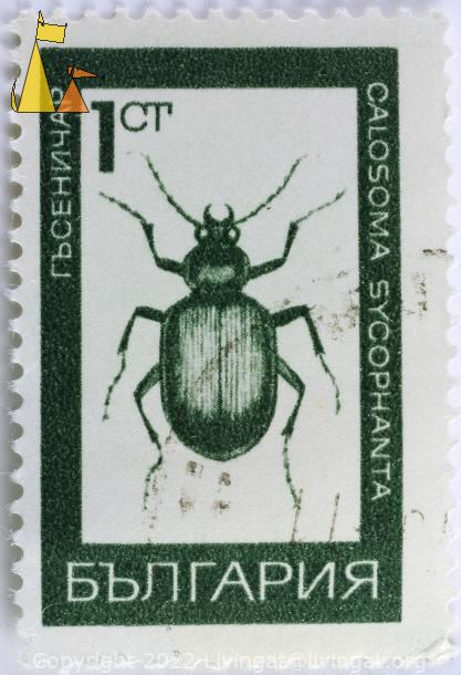 Forest Caterpillar Hunter, Bulgaria, stamp, insect, beetle, bug, green, 1 Ct, Calosoma sycophanta