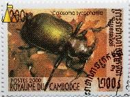 Forest caterpillar hunter, Royaume du Cambodge, Cambodia, stamp, insect, beetle, Calosoma sycophanta, Postes, 2000, 200 R