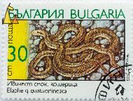 Four-Lined Rat Snake, Bulgaria, stamp, reptile, snake, 30 cm, 1989, Elaphe q quatuorlineata, Elaphe quatuorlineata quatuorlineata