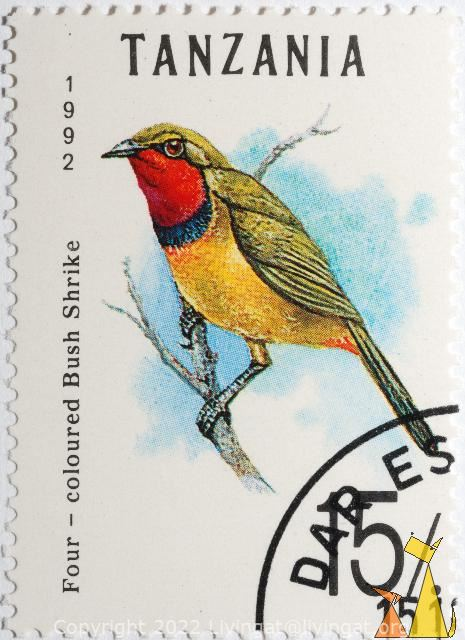 Four-coloured Bushshrike, Tanzania, stamp, bird, Telophorus quadricolor, 1992, Four-coloured Bushshrike, 15