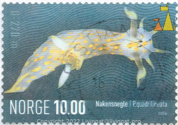 Fourline nudibranch, Norge, Norway, stamp, 2006, 10.00, Nakensnegle, nudi, Polycera quadrilineata