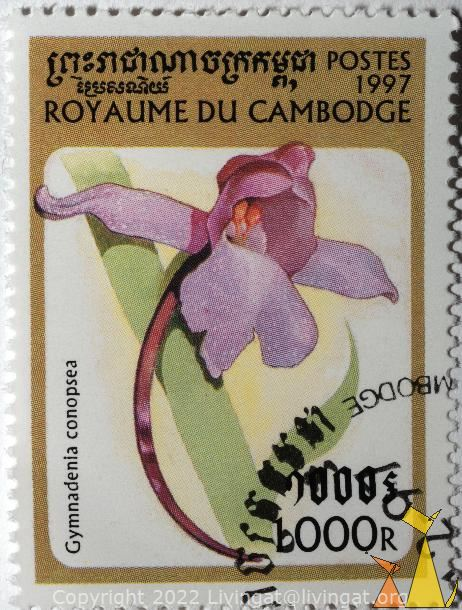Fragrant orchid, Royaume du Cambodia, Cambodia, stamp, plant, flower, orchid, Gymnadenia conopsea, 1000 R, Postes, 1997