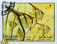 Freshwater Angel, Sharjah and Dependencies, Sharjah, stamp, fish, air mail, 3 Pterophyllum scalare