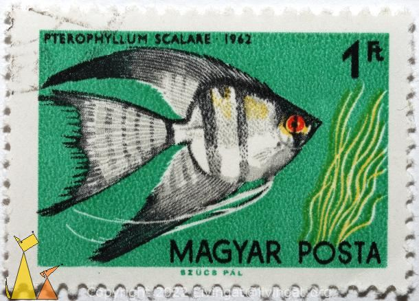 Freshwater angelfish, Magyar, Hungary, stamp, fish, Szucs Pal, Posta, 1 Ft, 1962, Peterophyllum scalare, Pterophyllum scalare