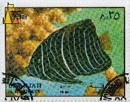 Fuvenile Angel, Sharjah and Dependencies, Sharjah, stamp, fish, air mail, 35 Dh, Pomacanthus annularis