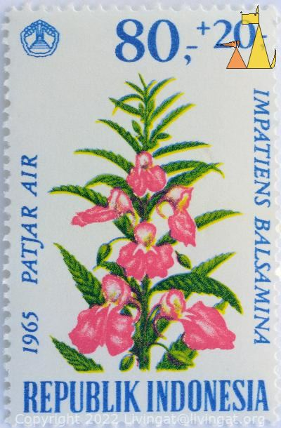 Garden Balsam, Republik Indonesia, Indonesia, stamp, plant, flower, 1965, Patjar air, 80+20, Impatiens balsamina