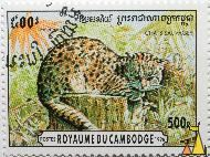 Geoffroy's Cat, Royaume du Cambodge, Cambodia, stamp, mammal, cat, Felis geoffroyi, 500 R, Chats Sauvages, Postes, 1996