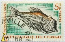 Giant hatchetfish, Republique du Congo, Congo, stamp, fish, 5 F, Postes, Cottet, Samson, Argyropeleus gigas, Argyropelecus gigas