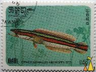 Giant snakehead, R.P. Kampuchea, Cambodia, stamp, fish, Postes, R.P. Kampuchea, 1985, 0.50 Riel, Ophiocephalus micropeltes, Channa micropeltes